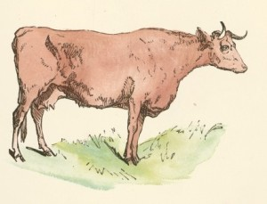 Brown_Cow_Drawing